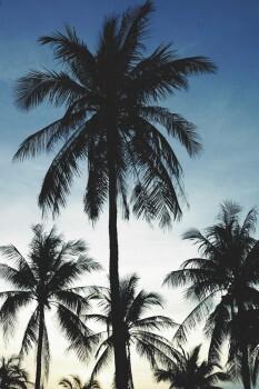 Palmen Fototapete Himmel
