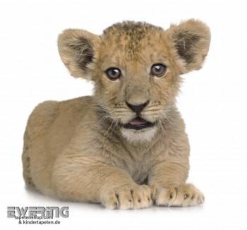 Löwen-Baby Wand-Bild Weiß