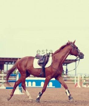 Pferd Wandbild Braun Vlies Mädchen