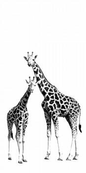 Wandbild Giraffen Xl